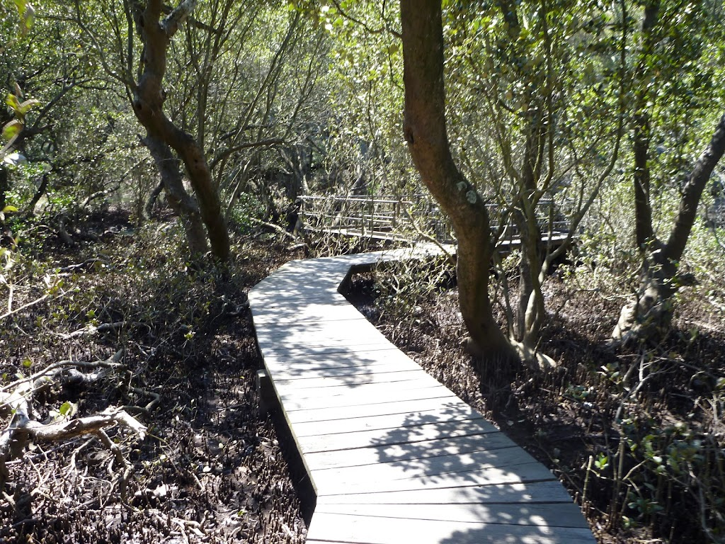 Buffalo Creek Mangrove walk