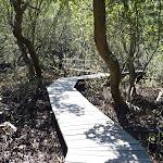 Buffalo Creek Mangrove walk