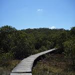 Kitty Creek boardwalk