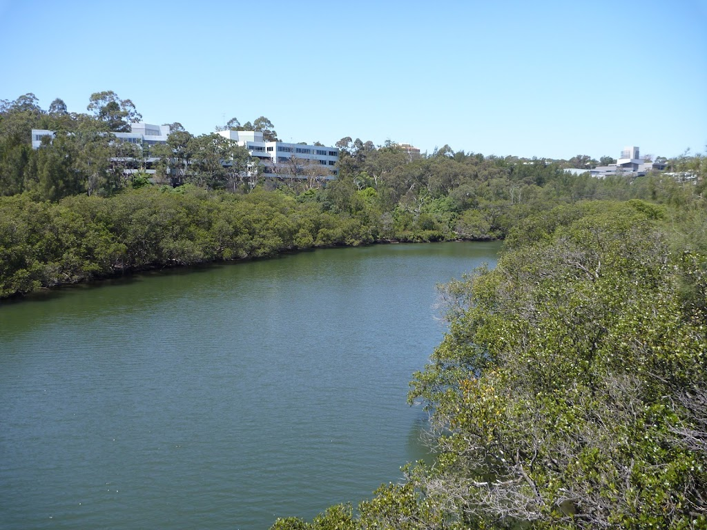 Lane Cove River (345838)
