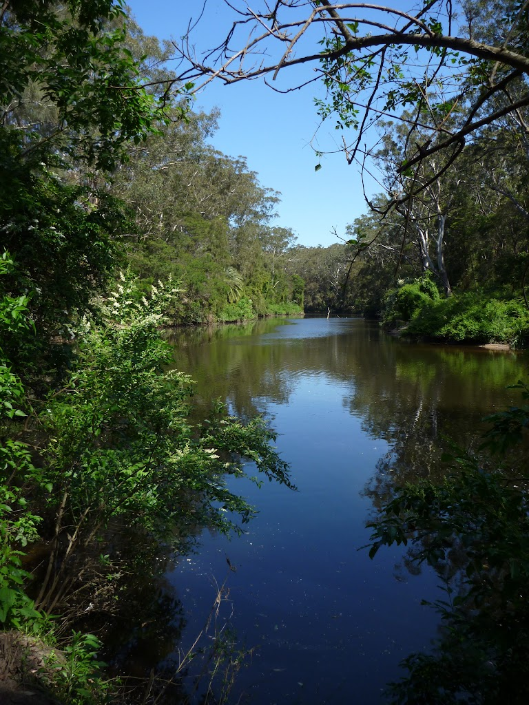 The Lane Cove River, near Fiddens Wharf