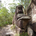 Interesting rock walk on the east side of the Lane Cove River (347611)
