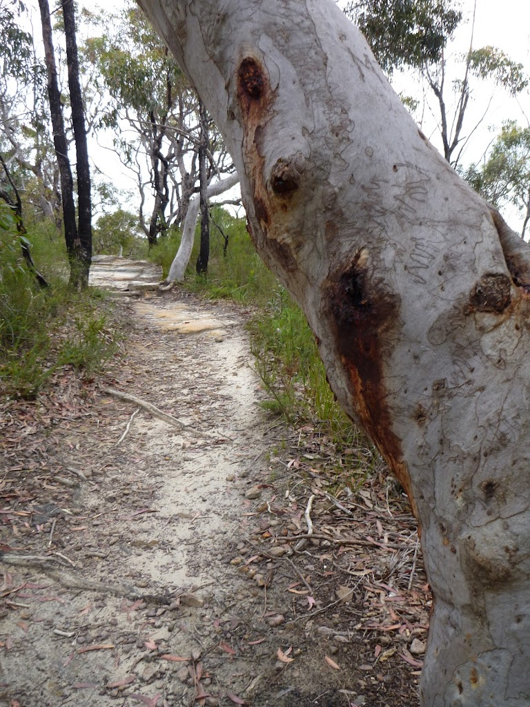 Scribbly Gums east of the F3