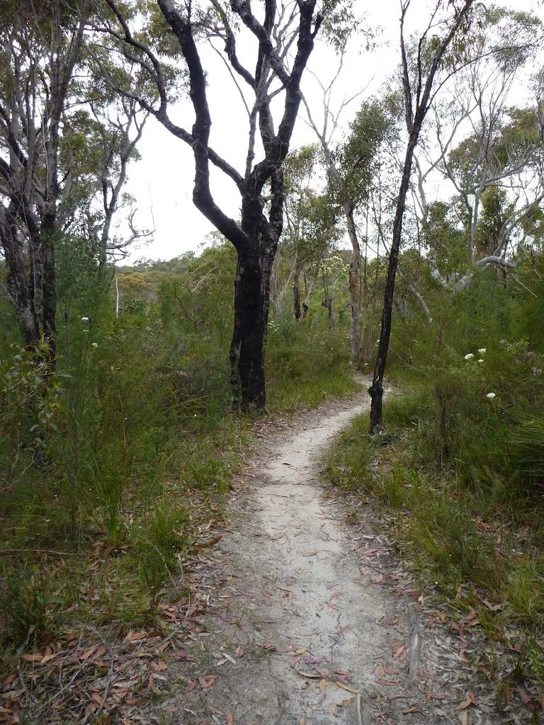 Sandy track on ridge north of Campbells Creek