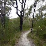 Sandy track on ridge north of Campbells Creek (350047)