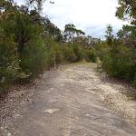 Trail leading over rock platform (350329)