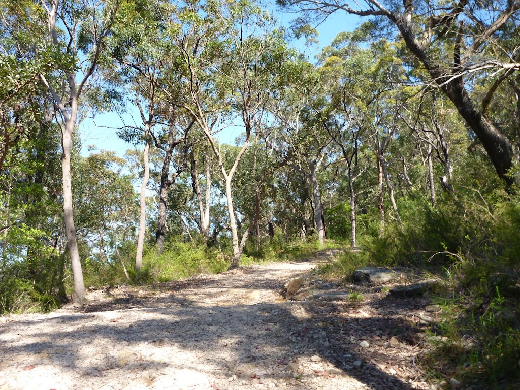 Walking along the management trail south of Berowra Heights (352064)