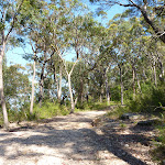 Walking along the management trail south of Berowra Heights