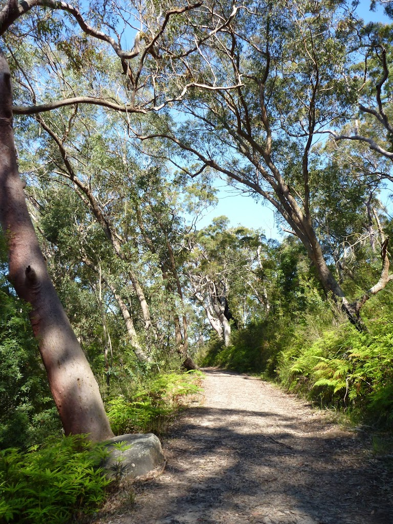 Walking through forest west of Berowra