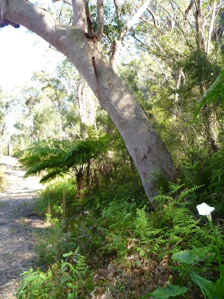 Lush gully on trail near Naa Badu Lookout
