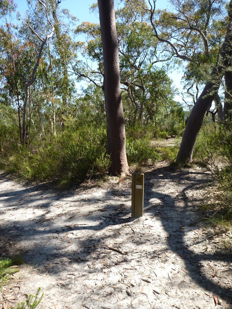 Int of Great North Walk and Currawong Road track
