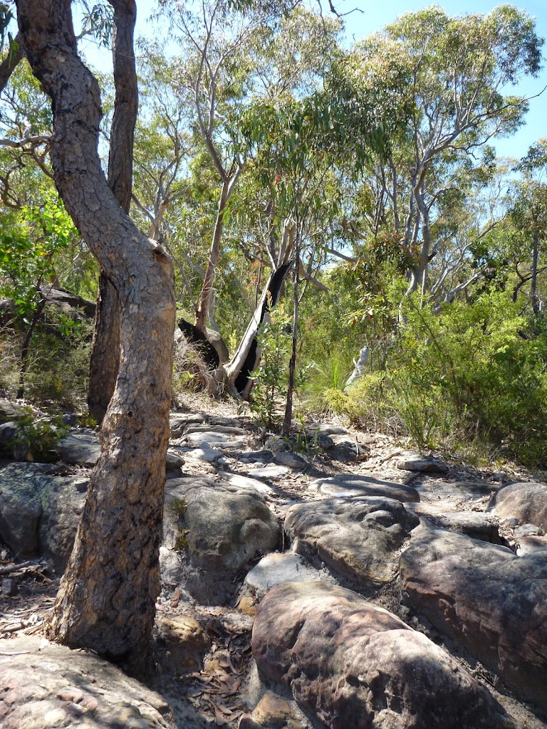 Rocky section west of Currawong Road track