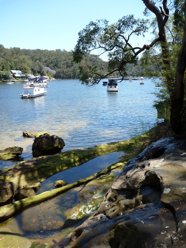 Confluence of Berowra Waters and Washtub Creeks