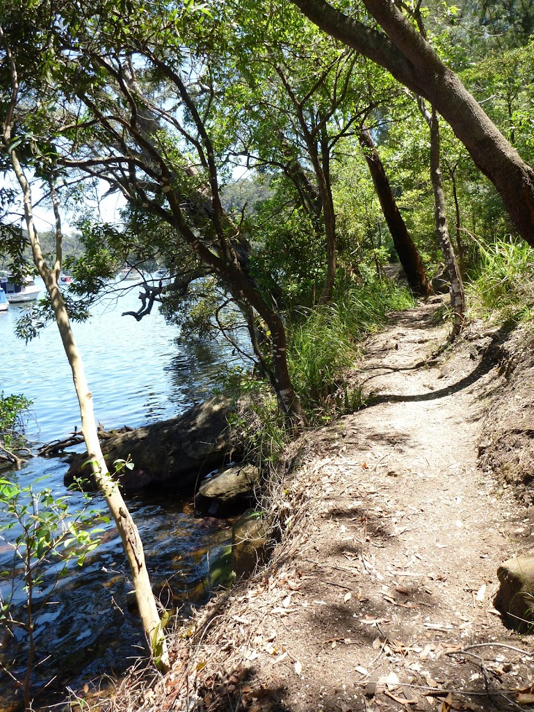 Walking along the track beside Berowra Creek