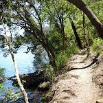 Walking along the track beside Berowra Creek