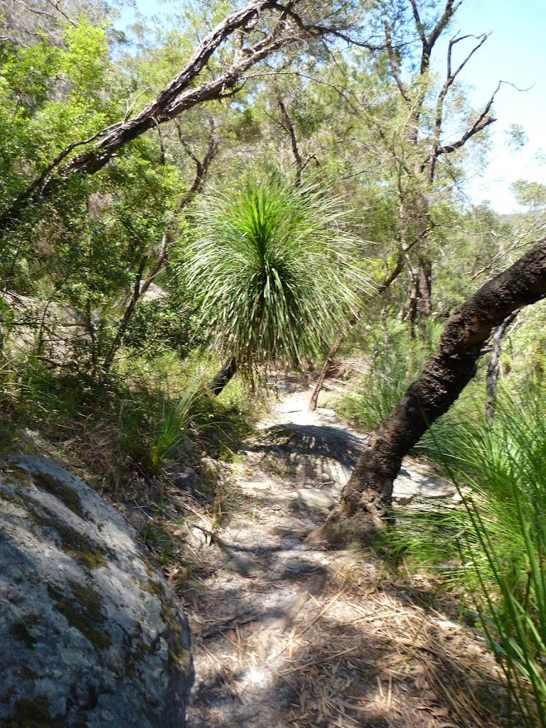 Grass trees on the steep easten valley of Berowra  Creek