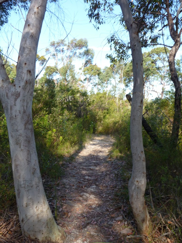 Scribbly gums west of Glendale Road