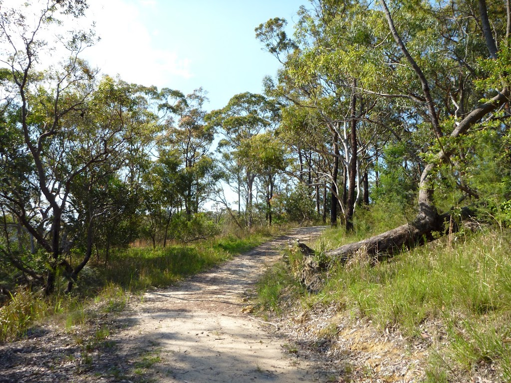 Trail at the back of Cowan (356708)
