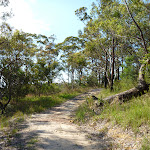 Trail at the back of Cowan