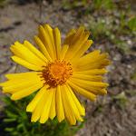 Yellow flower (357413)