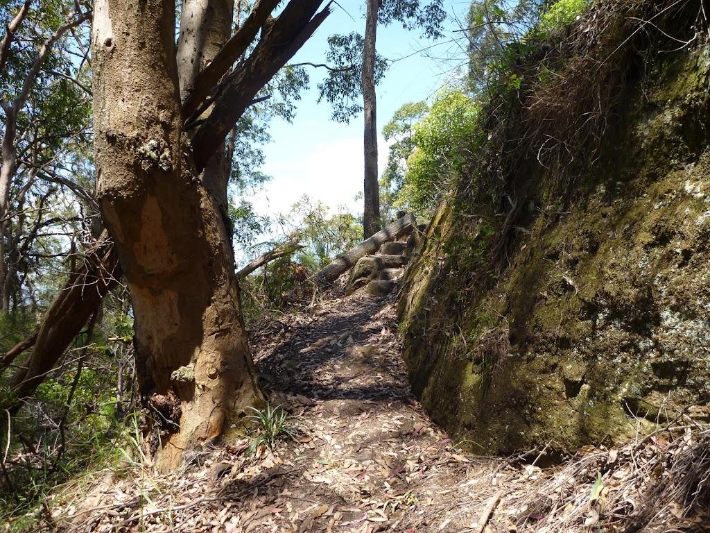 Steep track east of Heaton Gap Lookout