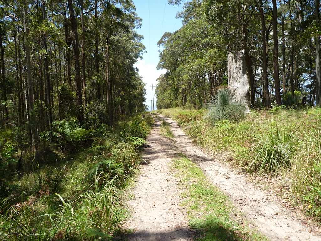 Trail west of Heaton Gap Lookout (359249)