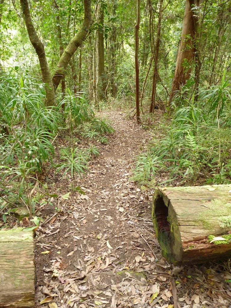 Track south of Wallis Creek