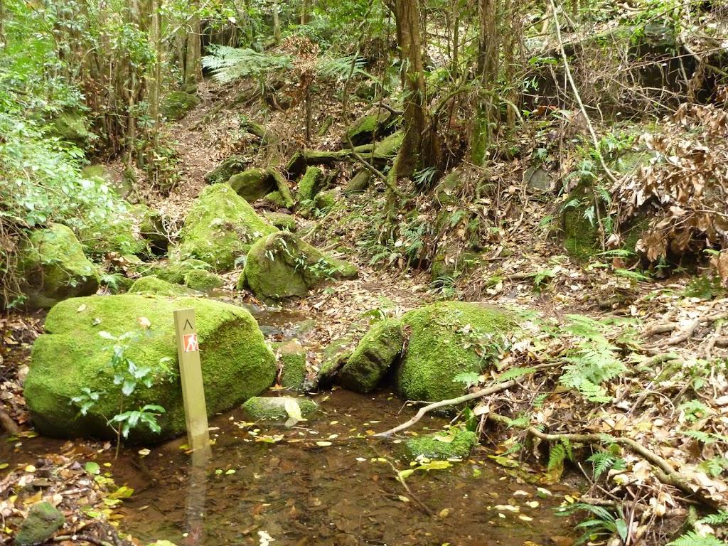 Side creek flowing into Wallis Creek