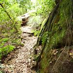 Barniers Road Trail