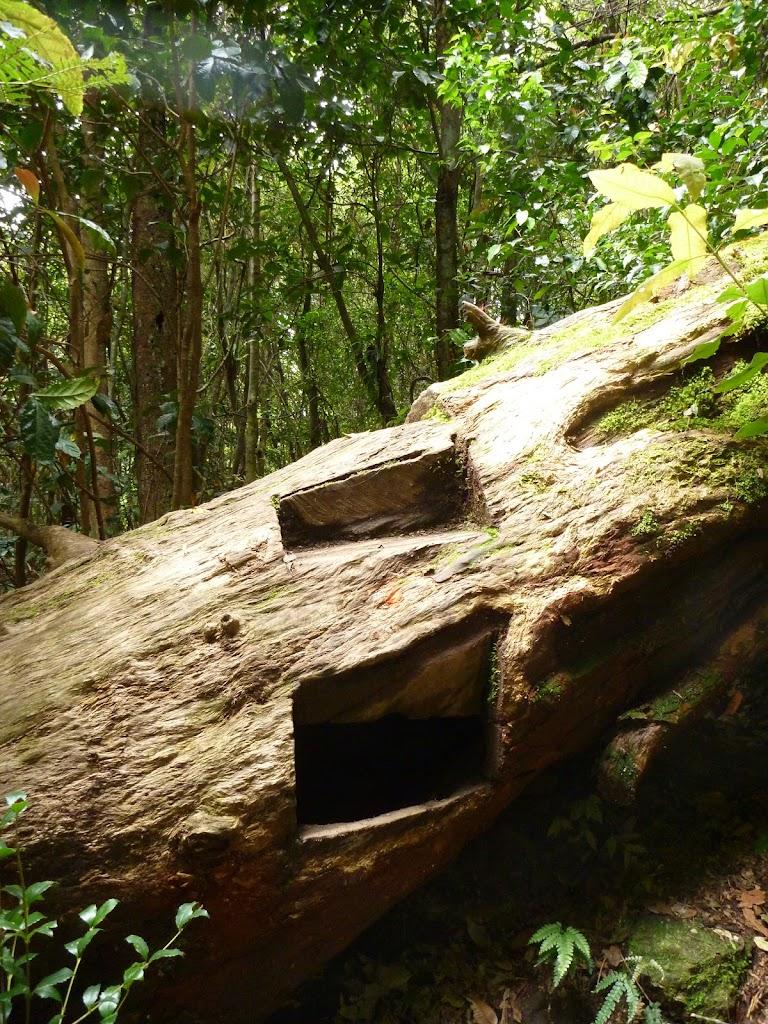Steps over fallen tree near Wallis Creek