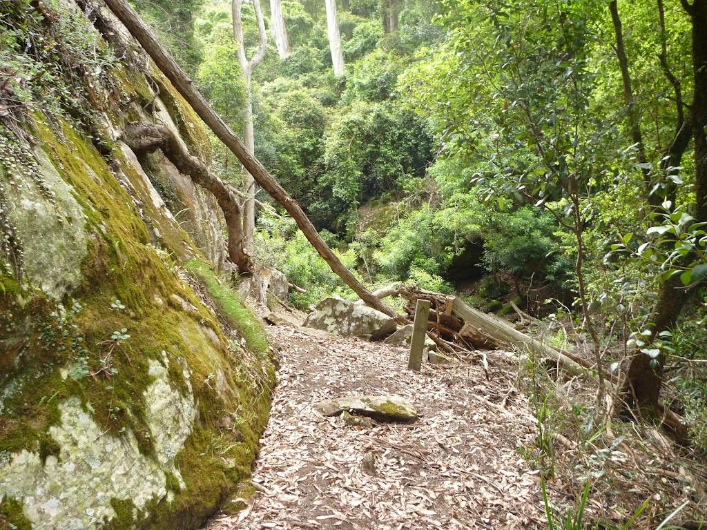 Mossy wall north of Wallis Creek