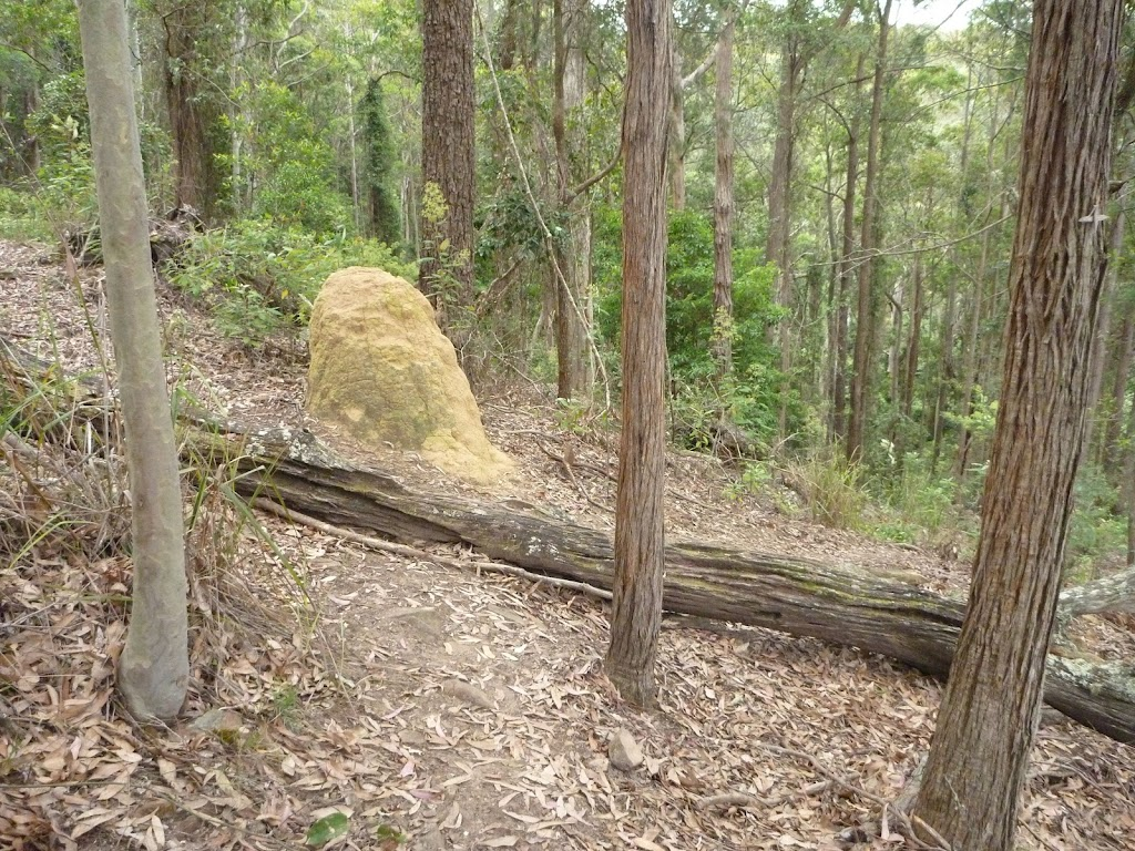 Termite Mound on The Great North Walk