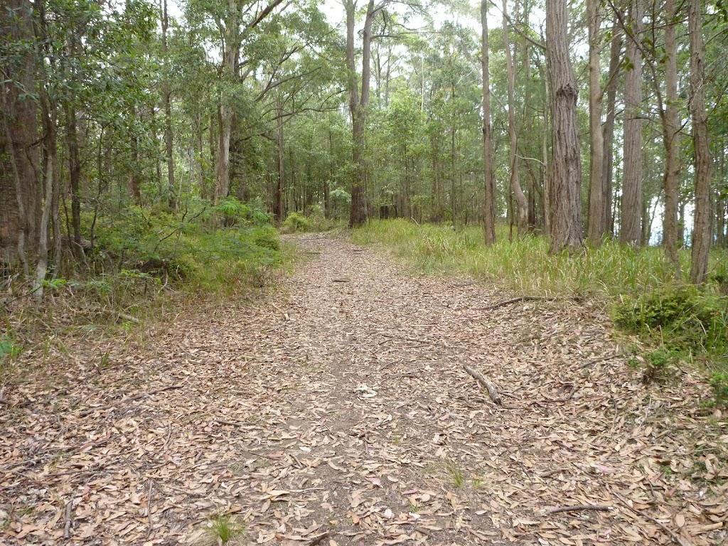 Walking along the pleasent leafy trail