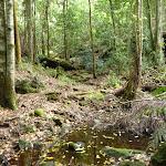 Looking onto Wallis Creek