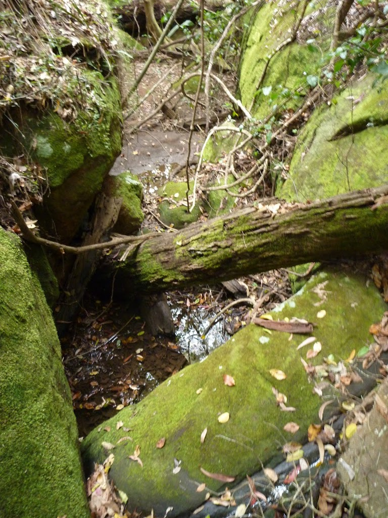 Small Mossy Creek
