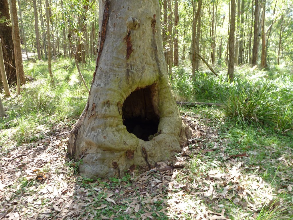 Hollow Tree in Near Barraba Trig (361757)