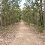 Langans Rd Watagan State Forest (362951)