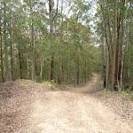 Langans Rd Watagan State Forest (363182)