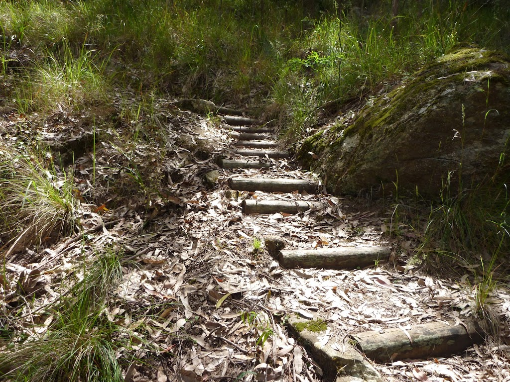 Timber steps on a steep hill, Watagan Creek valley