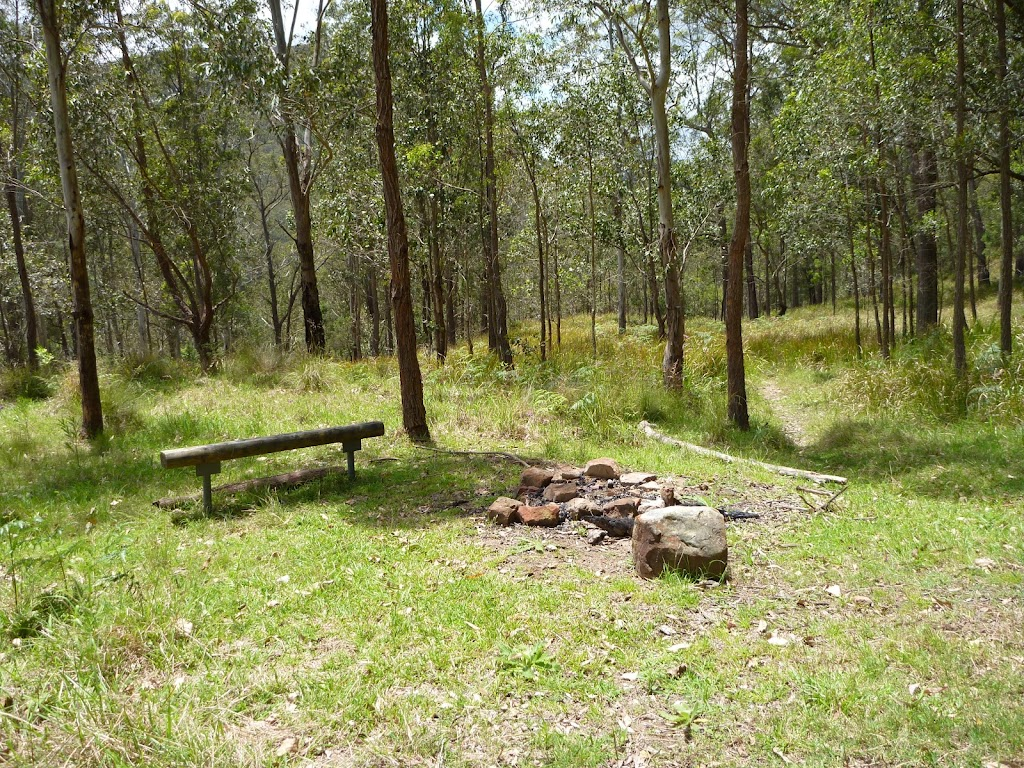 Seat and fire scar at Watagan Creek campsite