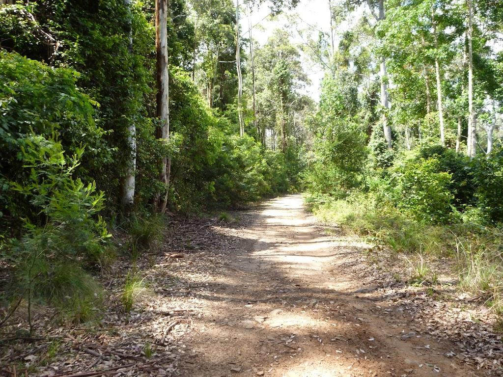 Dense forest along Warrawolong Rd