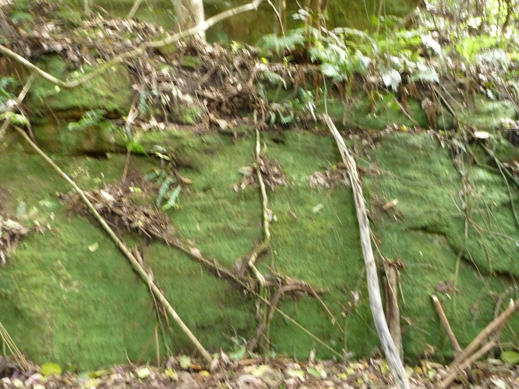 Moss wall, south of Wollombi Brook crossing