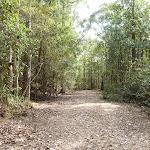 Wild Boar Road (364511)