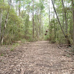 Wild Boar Road (364553)