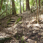 Steep track north of Wollombi Brook Pool (364619)