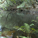 Wollombi Brook Pool (364667)