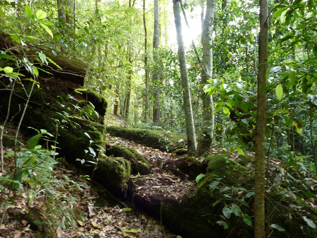 Moss and ferns characterise the Lyrebird trail (364796)