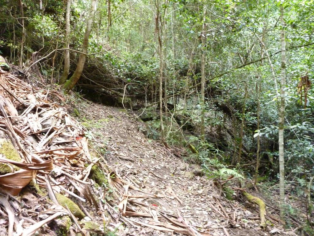 Lyrebird Trail, alongside Wollombi Brook