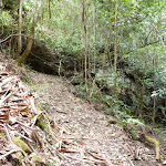 Lyrebird Trail alongside Wollombi Brook (364862)