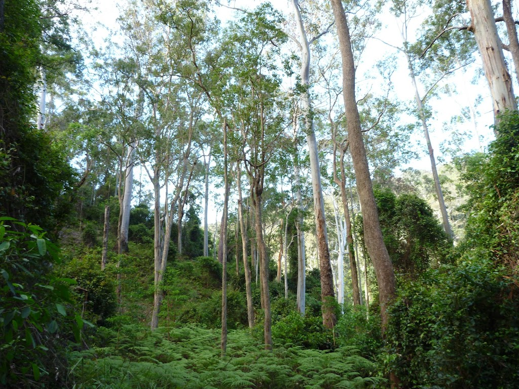Open canopy, west of Wollombi Brook